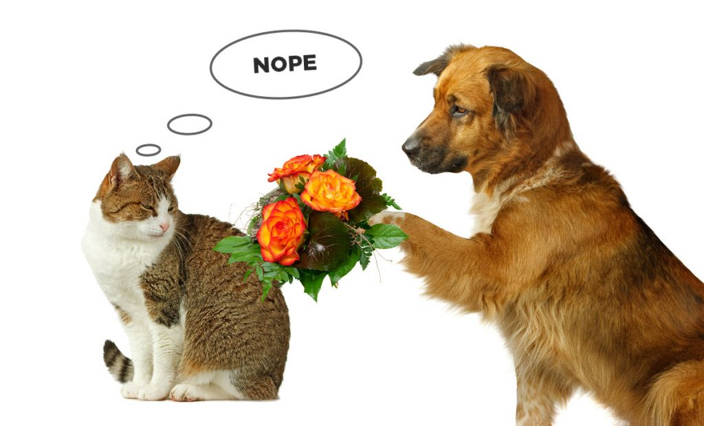 cat refuses flowers from a dog